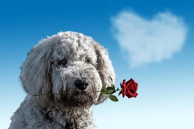 薔薇をくわえる犬
