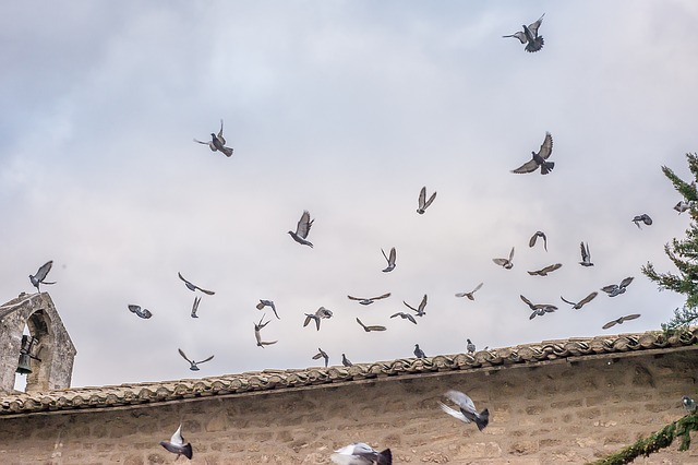 びっくりして飛び立つ鳥の群れ