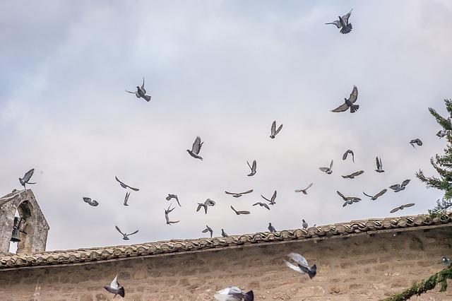 びっくりして飛び立つ鳥