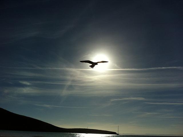 天に向かって飛ぶ鳥