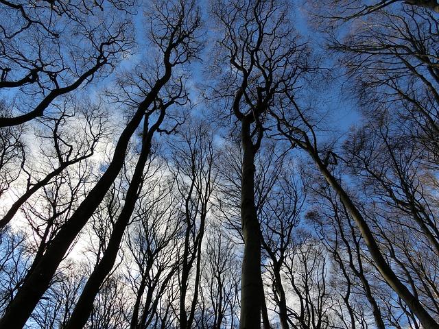空に向かって伸びる木