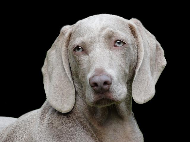 とぼけた顔した犬