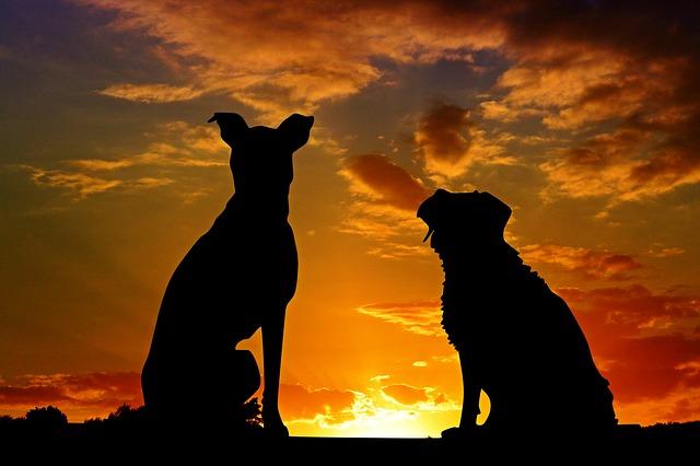 黄昏時と犬