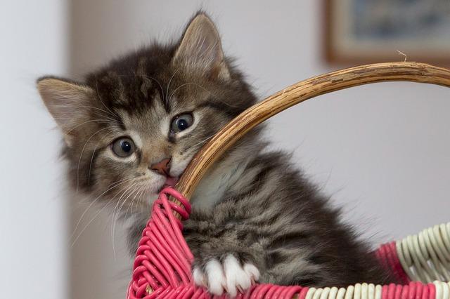 こちらを覗く子猫